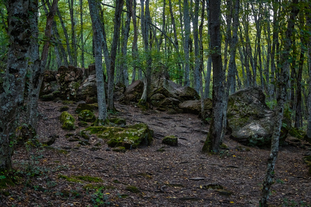 Photo for Forest landscape. - Royalty Free Image