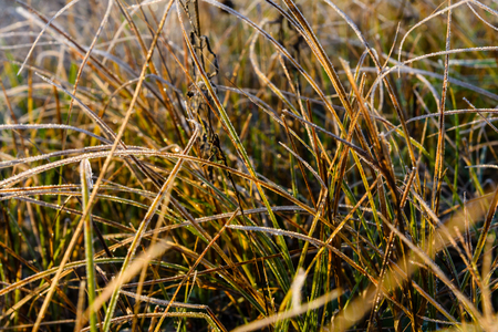 Photo for Grass covered with the hoarfrost on autumn - Royalty Free Image