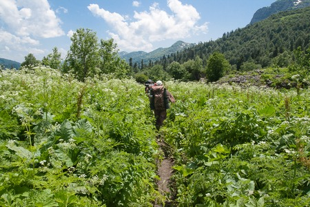 Tourists go on a footpath in the green bushes against background of mountains. Russia, North Caucasus