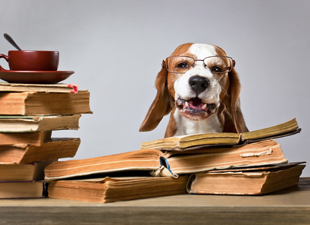 Foto de The very smart dog studying old books - Imagen libre de derechos