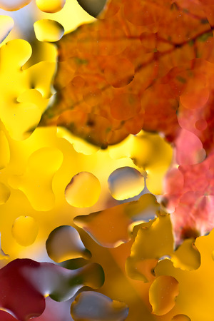 Autumn background with colorful maple leaves . Selective focus .