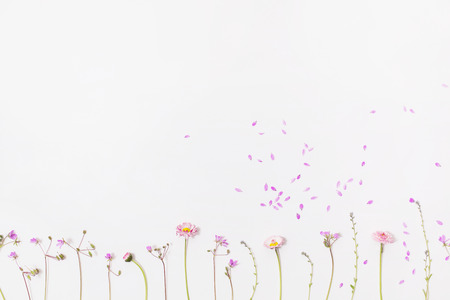 Lay flat, wildflowers on a white background
