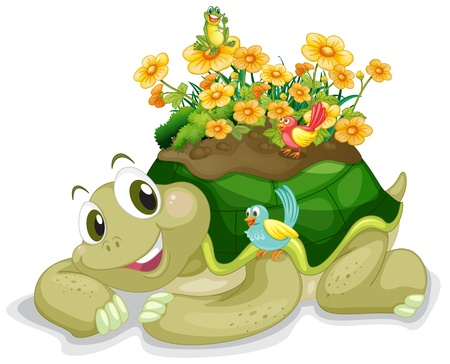 illustration of tortoise on a white background