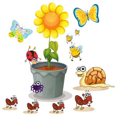 illustration of plant pot and various insects on white