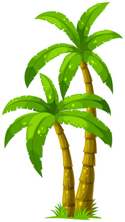 Illustration pour Illustration of the two palm trees on a white background - image libre de droit