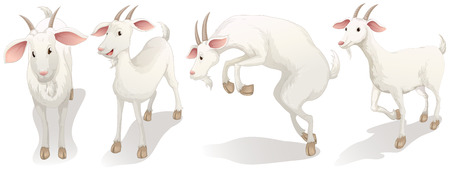 Illustration for Illustration of the four white goats on a white background - Royalty Free Image