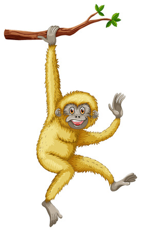 Illustration for illustration of a gibbon hanging on a branch - Royalty Free Image