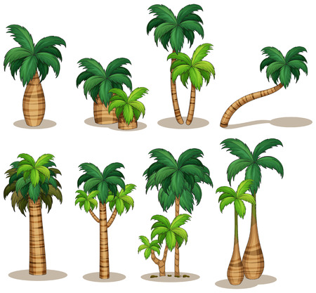 Illustration for Illustraion of a set of palm tree - Royalty Free Image