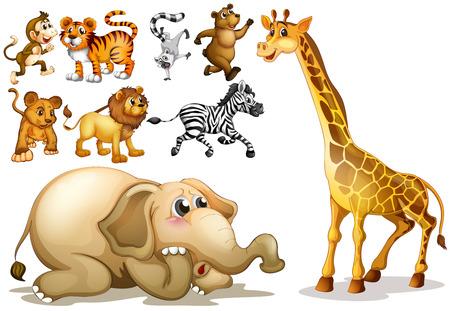 Illustration for Illustration of a set of many animals - Royalty Free Image