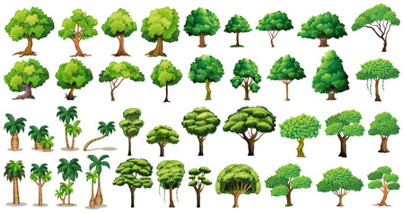 Illustration for Diversity of trees set on white - Royalty Free Image