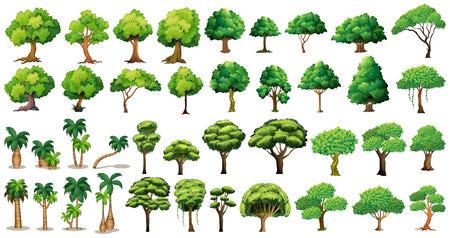 Illustration pour Diversity of trees set on white - image libre de droit