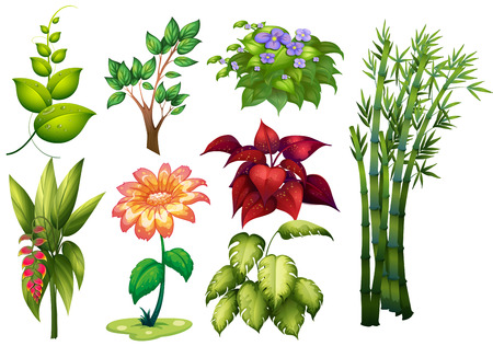 Illustration for Illustration of different kind of plant and flower - Royalty Free Image