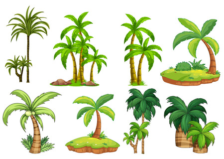 Illustration for Illustration of different kind of palm trees - Royalty Free Image