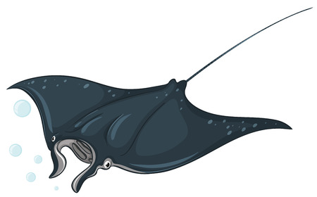 Ilustración de Illustration of a close up stingray - Imagen libre de derechos