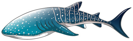 Illustration for Illustration of a close up whaleshark - Royalty Free Image