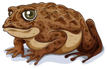 Ilustración de Illustration of a close up toad - Imagen libre de derechos