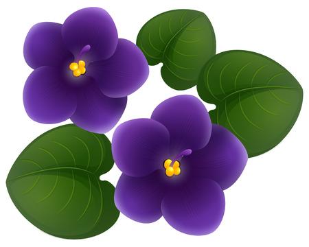 Illustration pour African violet flowers and green leaves illustration - image libre de droit