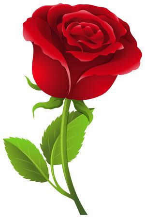 Illustration for Red rose on stem illustration - Royalty Free Image