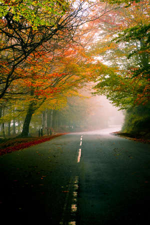 Photo pour Autumn landscape with a beautiful road with colored trees - image libre de droit
