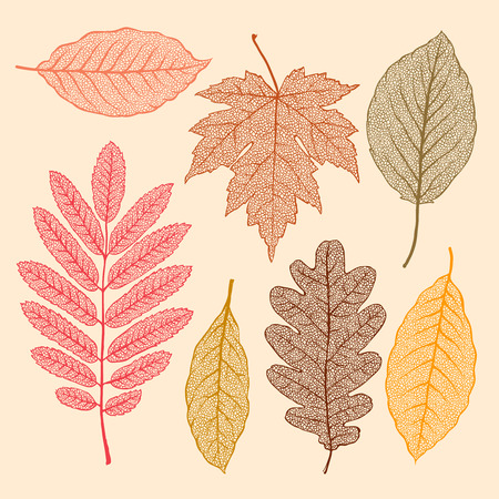 Illustration for Autumn leaves, isolated dried leaves set  - Royalty Free Image