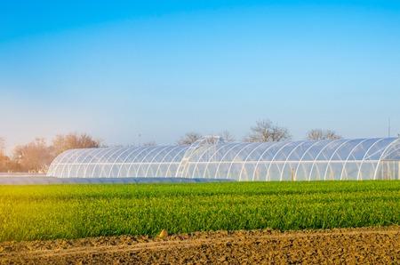 Foto de greenhouses in the field for seedlings of crops, fruits, vegetables, lending to farmers, farmlands, agriculture, rural areas, agro-industrial complex. winter crops. selective focus - Imagen libre de derechos