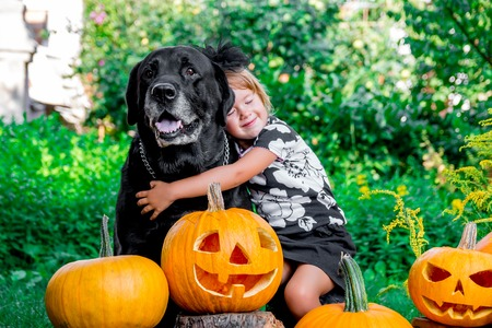 Halloween. Child dressed in black near labrador between jack-o-lantern decoration, trick or treat. Little girl with dog near pumpkin in the wood, outdoors. Love