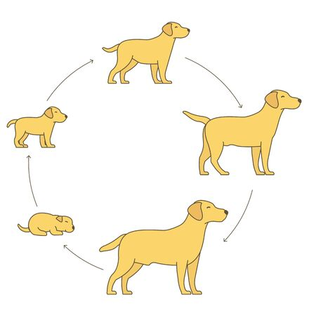 Illustration for Round stages of dog growth set. Pet life cycle. - Royalty Free Image