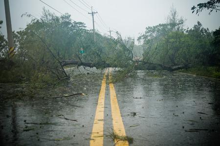 Foto de Uprooted tree blocking road during a typhoon - Imagen libre de derechos