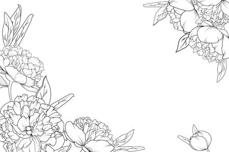 Illustration for Peony rose garden flowers black and white detailed outline drawing. Corner border frame decoration element template. Horizontal landscape layout. Vector design illustration. - Royalty Free Image