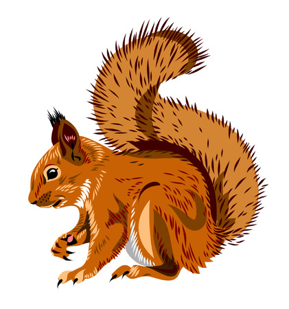 Illustration pour squirrel - image libre de droit