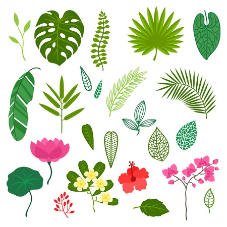 Illustration pour Set of stylized tropical plants, leaves and flowers. - image libre de droit