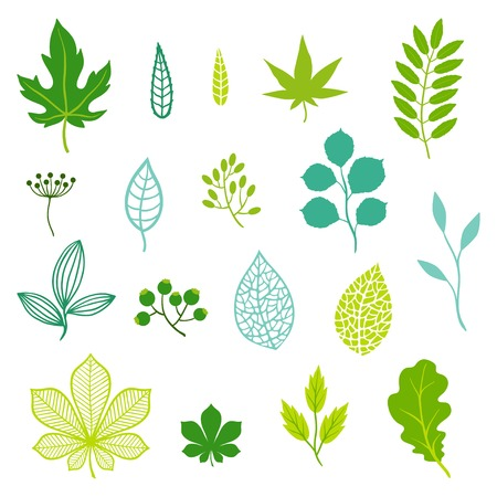 Illustration for Set of green leaves and elements. - Royalty Free Image