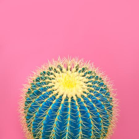 Photo pour Cactus. Art Gallery Fashion Design. Minimal Stillife. Blue cactus Mood. Trendy Bright Summer Colors. Creative Unusual Style. Fashion Concept, pink background. Detail - image libre de droit