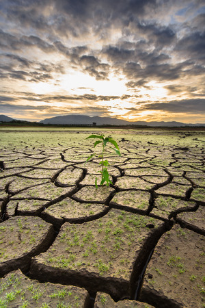 Photo pour Little tree and cracked earth - image libre de droit