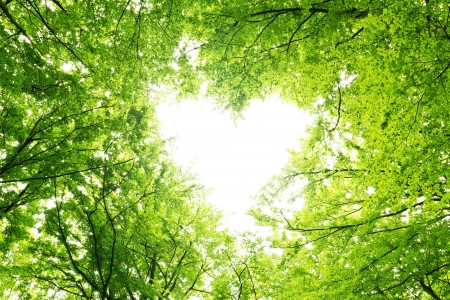 Photo for Heart shaped opening in a canopy of leaves - Royalty Free Image