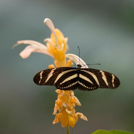 Foto de Close-up of a butterfly on flower at Butterfly Palace, Branson, Taney County, Missouri, USA - Imagen libre de derechos