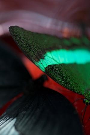 Foto de Close-up of a butterfly at Butterfly Palace, Branson, Taney County, Missouri, USA - Imagen libre de derechos