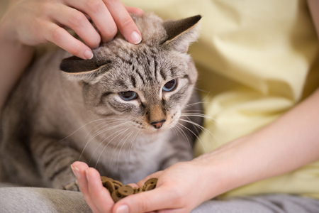 Foto de Unrecognizable woman feeding her tabby cat at home - Imagen libre de derechos