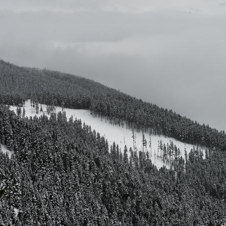 Photo pour Snow covered trees on mountain, Whistler, British Columbia, Canada - image libre de droit