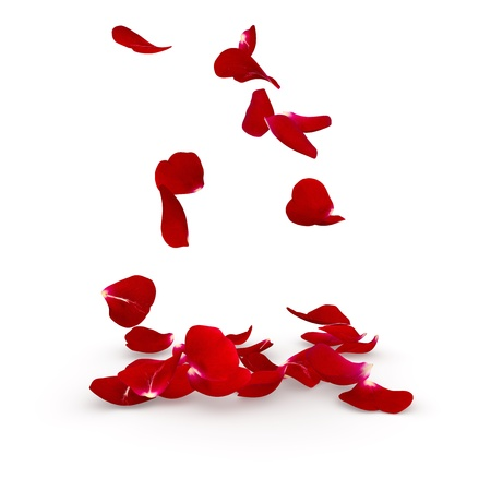 Photo pour Petals dark red rose flying on the floor. Isolated background. 3D render - image libre de droit