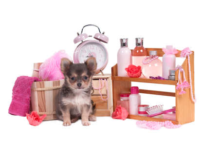 Set of SPA and pink body relaxation objects and a cute chihuahua puppy isolated on white background