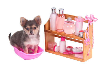 Shelf full of body care accessories and Chihuahua sitting in a bathtube isolated on white background