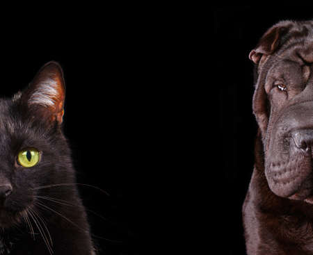 Cat and Dog - half of muzzle close up portraits isolated on black