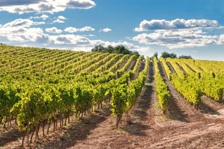 Photo pour Vineyard and hills, Catalonia, Spain - image libre de droit