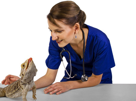 young caucasian female veterinarian with reptile pet