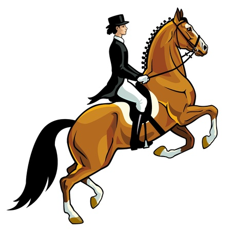 Ilustración de horse rider,dressage,equestrian sport, isolated on white background,side view picture - Imagen libre de derechos