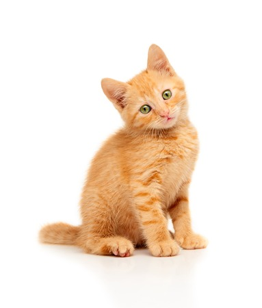 Foto de Cute little red kitten sitting and looking straight at camera, isolated on a white background - Imagen libre de derechos