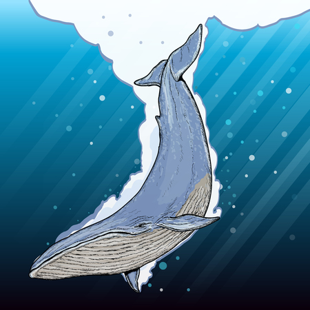 Illustration for Blue whale underwater cartoon vector - Royalty Free Image