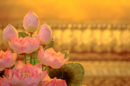 Photo pour Aeautiful artificial pink lotus with Golden background. - image libre de droit