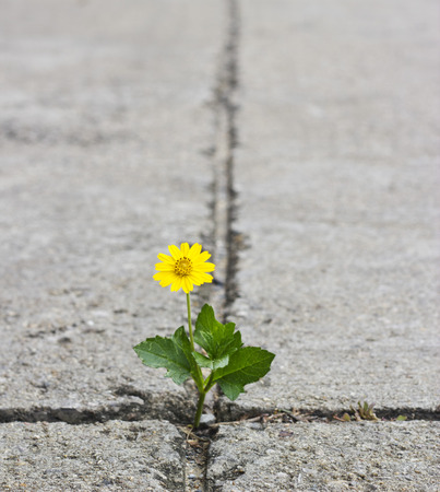 Photo for Beautiful flower growing on crack street - Royalty Free Image